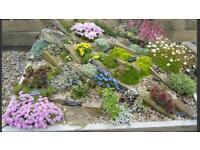 WANTED : Rockery Perennials!