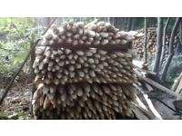 Chestnut cleft fence posts 1.8M(6feet) pointed typical 10 year life with no chemicals!
