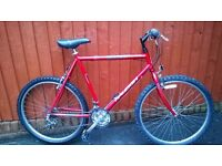 Larger Raleigh Mountain Bike..A Big Bike for the Taller Man... Small Price £65..One of many Bikes