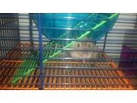 2 x friendly Gerbils and all accessories
