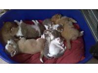 2 Beautiful Pomeranian X puppies & 2 wee kittens