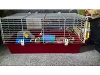 Guinea Pig + Cage + Extras