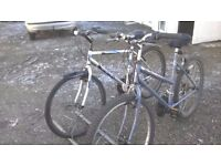 LADIES AND GENTS MOUNTAIN BIKES LADY 18 INCH GENTS 20 IN FRAMES 26 IN WHEELES