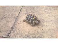 Lost tortoise brighton/hove