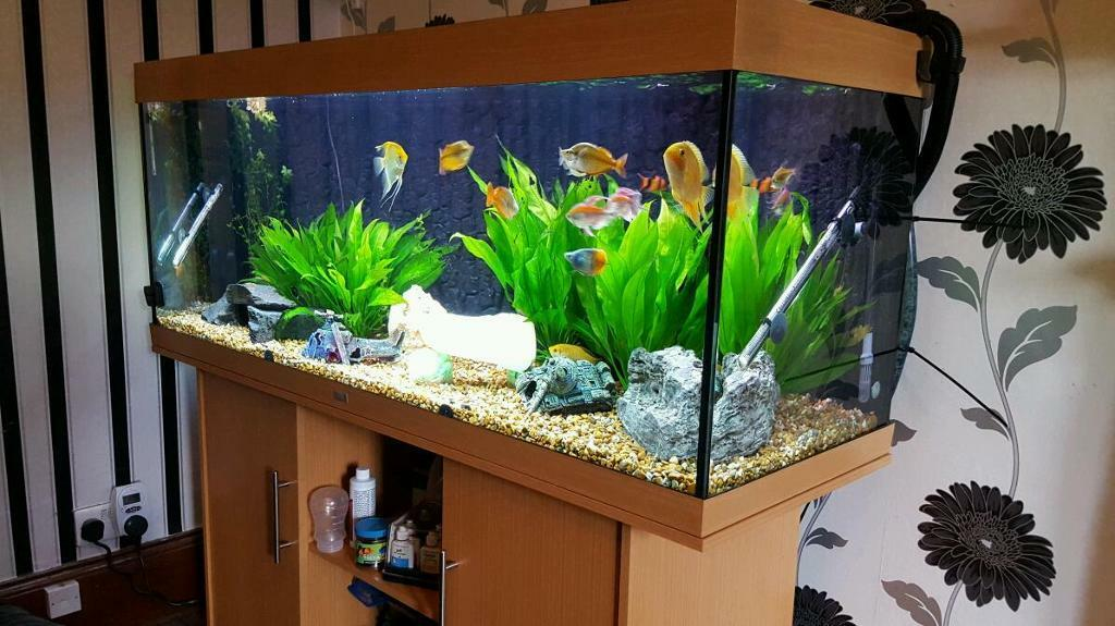 juwel rio 450 aquarium full set up in tollcross glasgow gumtree. Black Bedroom Furniture Sets. Home Design Ideas