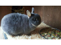 Rabbits x2 Netherlands dwarf female and double hutch