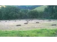 Small Bale Hay For Sale - Good Quality