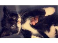 1 kitten (Enfield London)