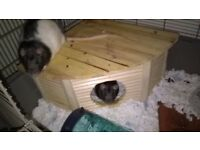 2 Male Rats Free to good home or with cage £45