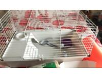 Rabbit/cage for 2 guinea pigs