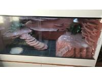 Male bearded dragon with vivarium and cabinet OPEN TO OFFERS