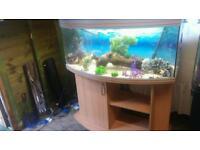 4FT RENA AQUALIFE PANARAMIC250.340 LITRE BOWFRONT FISHTANK WITH MATCHING CABINET+ EXTERNAL FILTER
