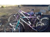 LADIES AND GENTS ADULT MOUNTAIN BIKES 26 in wheels BOTH ARE IN GOOD CONDOTION
