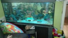 Jewel fish tank and stand