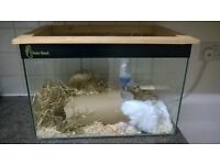 2 male gerbils,free to good home.