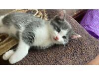 Gorgeous friendly kittens