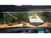 Fish tank 150l approx 4ft