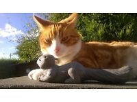 Dog Walking and Cat Sitting in Stanley Durham Area