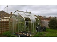 Free green house to a good home
