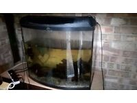 two fish tanks and a metal stand