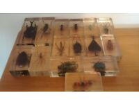 Selection of 15 insect paperweights