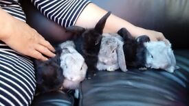 5 cute baby rabbits for sale.