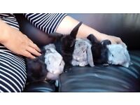 6 cute baby rabbits for sale.