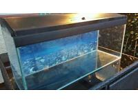 Marine or tropical fish tank aquarium