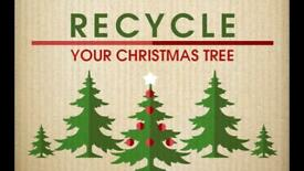 Real xmas tree collection and recycle