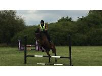 Experienced rider for share horse 16'2
