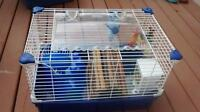 Supplies and Food for your Guinea Pig Pet