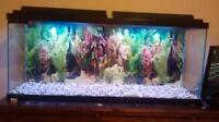 55 gallon marineland fish tank