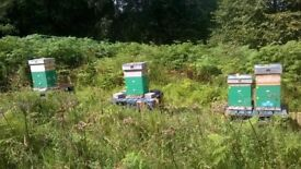 Bees for sale, 11 frames per box. Single & double boxes for sale