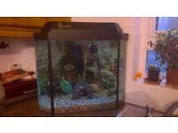 Corner fish tank and equipment