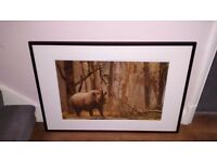 Two framed pictures from Wildlife Photographer competition.