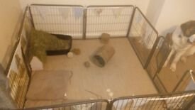 Whelping pen/rabbit pen