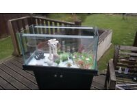 Fish Tank (100 Ltr) and Accessories for Sale