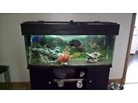 4ft tropical aquarium with stand