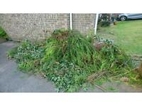 Garden waste to be removed