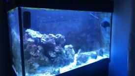Red Sea max 250l