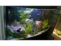 300+ Litre 4 Foot Bow fronted fish tank aquarium and stand *TANK AND STAND*