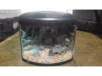Corner fish tank with pump, light etc