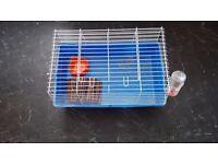Guinea Pigs indoor cage
