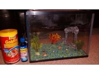 Fish tank with accesories