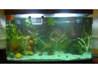 Interpet 120l fish tank with fluval 206 external filter etc