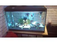 Fish tank tropcal