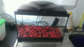 Fish tank with pump and light