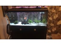 4ft fish tank everything included