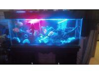 Fish tank tropical