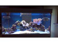 250L Eheim Fish Tank